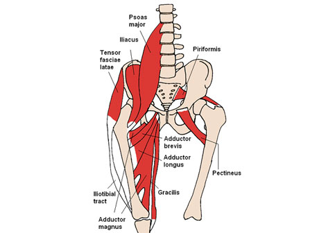 2012-10-05_Anterior_AnteriorHipMuscles_WEB.jpg Images - Frompo